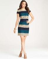 Ann Taylor Tall Bold Stripe Lace Dress