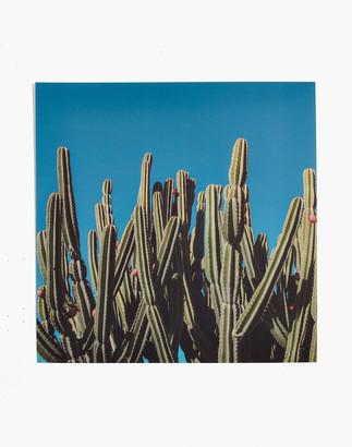 Madewell Max Wanger Print Shop Desert Bloom Art Photograph
