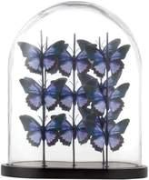 Linea Butterfly Cloche