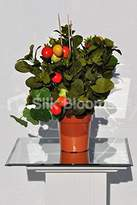 Silk Blooms Ltd Realistic Artificial Tomato Tree Arrangement