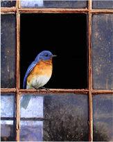 Asstd National Brand Bluebird Window Canvas Wall Art