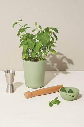 Modern Sprout Celebrate Live Well Gift Set