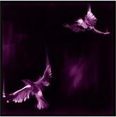 Jonathan Bass Studio Bird Study 7 - Purple, Decorative Framed Hand Embellished Canvas