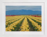 Minted Carpet of Tulips Art Print