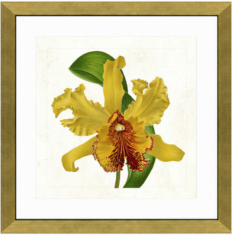 Vintage Print Gallery Graceful Orchid Ii Framed Graphic Art