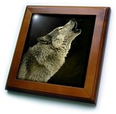 3dRose LLC ft_724_1 Wild animals - Timber Wolf - Framed Tiles