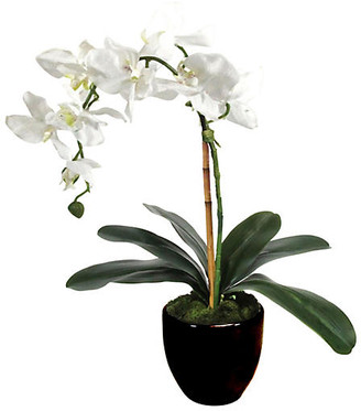 """One Kings Lane 18"""" White Orchid with Planter - Faux"""