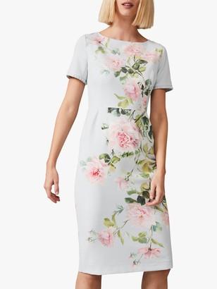 Phase Eight Shanea Floral Dress, Eau De Nil
