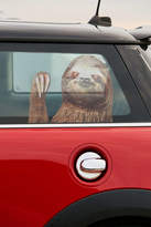 Urban Outfitters Sloth Car Decal