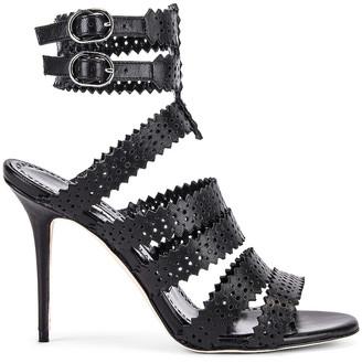 Manolo Blahnik Riesa 105 Sandal in Black | FWRD