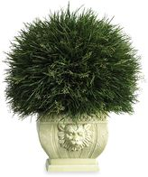 Bed Bath & Beyond Nearly Natural Potted Grass with White Vase