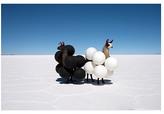 Gray Malin, Llamas Black/White Balloons