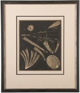 Rejuvenation Framed Astronomical Engraving Comets c1900