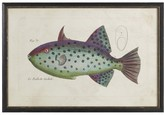 Williams-Sonoma Tropical Fish Series, Sale
