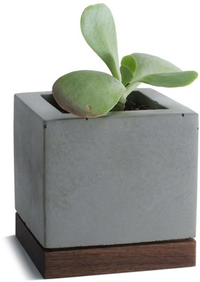 Komolab Succulent Planter Concrete With Walnut Base