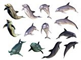 Set of 2 Waterproof Temporary Fake Tattoo Stickers Cool Multi Color Dolphin Ocean Animals Unique