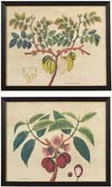 OKA Pair Of Exotic Fruit Trees Framed Prints