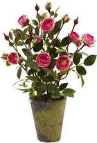 Asstd National Brand French Rose Garden