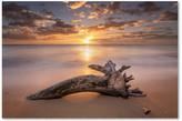 Trademark Fine Art Pierre Leclerc 'Beach Tree Sunrise' Canvas Art, 47x30
