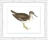 """One Kings Lane Sea Bird III Art - 23""""L x 19""""W"""