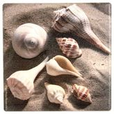 Thirstystone Occasions Seashells Square Coaster