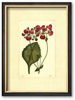 Art.com ''Red Curtis Botanical IV'' Framed Art Print