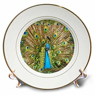 N. 3drose 3dRose Peacock Head Peacock Feathers, Porcelain Plate, 8-inch
