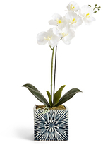Marks and Spencer Orchid in Geo Pot