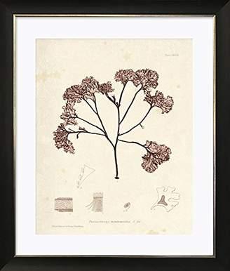 Marine Botanicals IV Framed Art Picture/Print In A Black Frame - Glass Front - Outside Measurements 51 x 43cm
