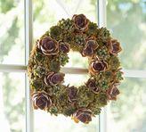 Pottery Barn Live Succulent Wreath