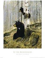 Coleman Generic In the Adirondacks Art Poster Print by Michael Coleman, 19x26