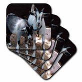 3dRose cst_1068_4 Pygmy Goat Ceramic Tile Coasters, Set of 8