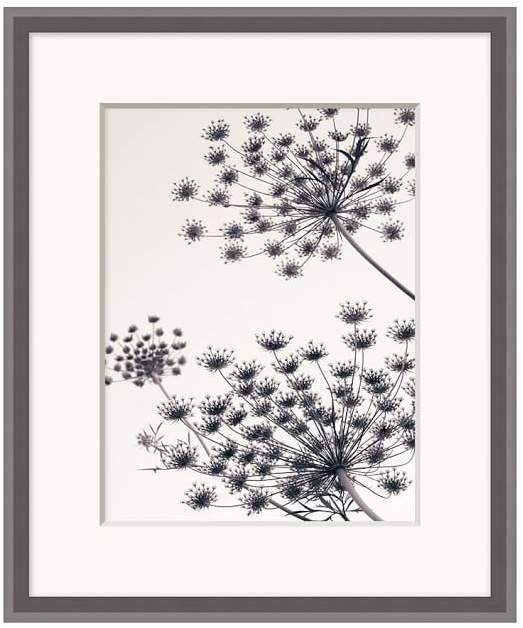 Pottery Barn Fennel in the Wind Framed Print