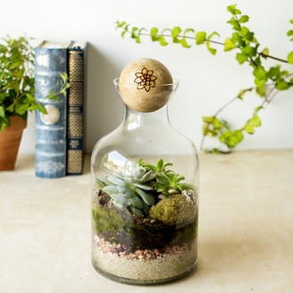 Cathy's Concepts 56-ounce Glass Succulent Terrarium with Wood Stopper