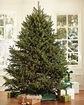 Williams-Sonoma Williams Sonoma Fresh Blue Ridge Mountain Christmas Tree