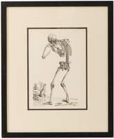 Rejuvenation Framed Anatomical Study Engraving of Skeleton w/ Curved Back