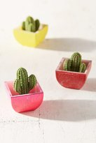Urban Outfitters Exclusive Blind Box Grow Cactus Figure
