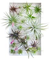 Airplant Frame Garden