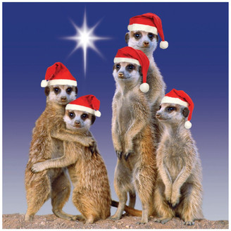 Simson Beyond Blue Charity Christmas Boxed Cards, Night Meerkats - 10