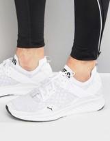 Puma Ignite Evoknit Lo Sneakers In White 18990402