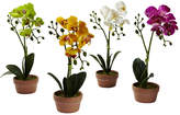 Asstd National Brand Phalaenopsis Orchid With Clay Vase Set Of 4