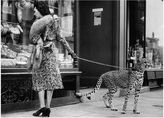 William Stafford Andy Irvine, Cheetah Who Shops