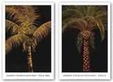 "Rob-ert Image Conscious Koala, Palm Oro Set by Robert Charles Dunahay 12""x17"" Art Print Poster"