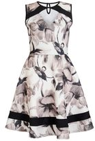 Quiz Cream and Black Floral Skater Dress