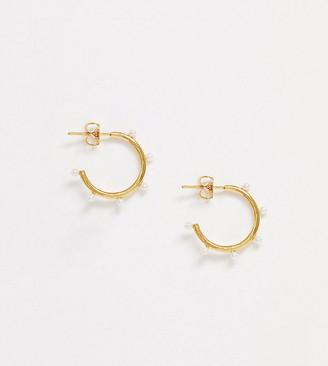 Orelia exclusive faux pearl hoop earrings in gold plate