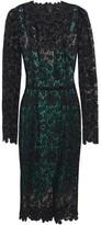 Dolce & Gabbana Cotton-blend Guipure Lace Dress