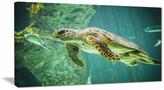 "Design Art Usa ""Huge Turtle Swimming"" Animal Digital Art Canvas Print"