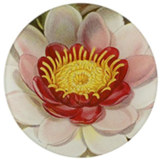 John Derian Rose Colored Water Lily Plate