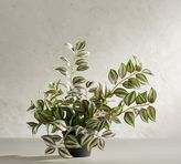 Pottery Barn Potted Wandering Gypsy Houseplant