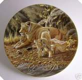 Wedgwood Compton and Woodhouse African Lion plate
